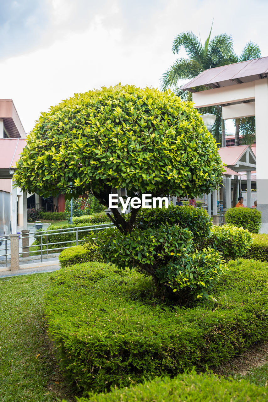 plant, architecture, building exterior, built structure, green color, house, building, nature, growth, front or back yard, tree, residential district, grass, no people, lawn, day, outdoors, garden, sky, bush, hedge, luxury, ornamental garden