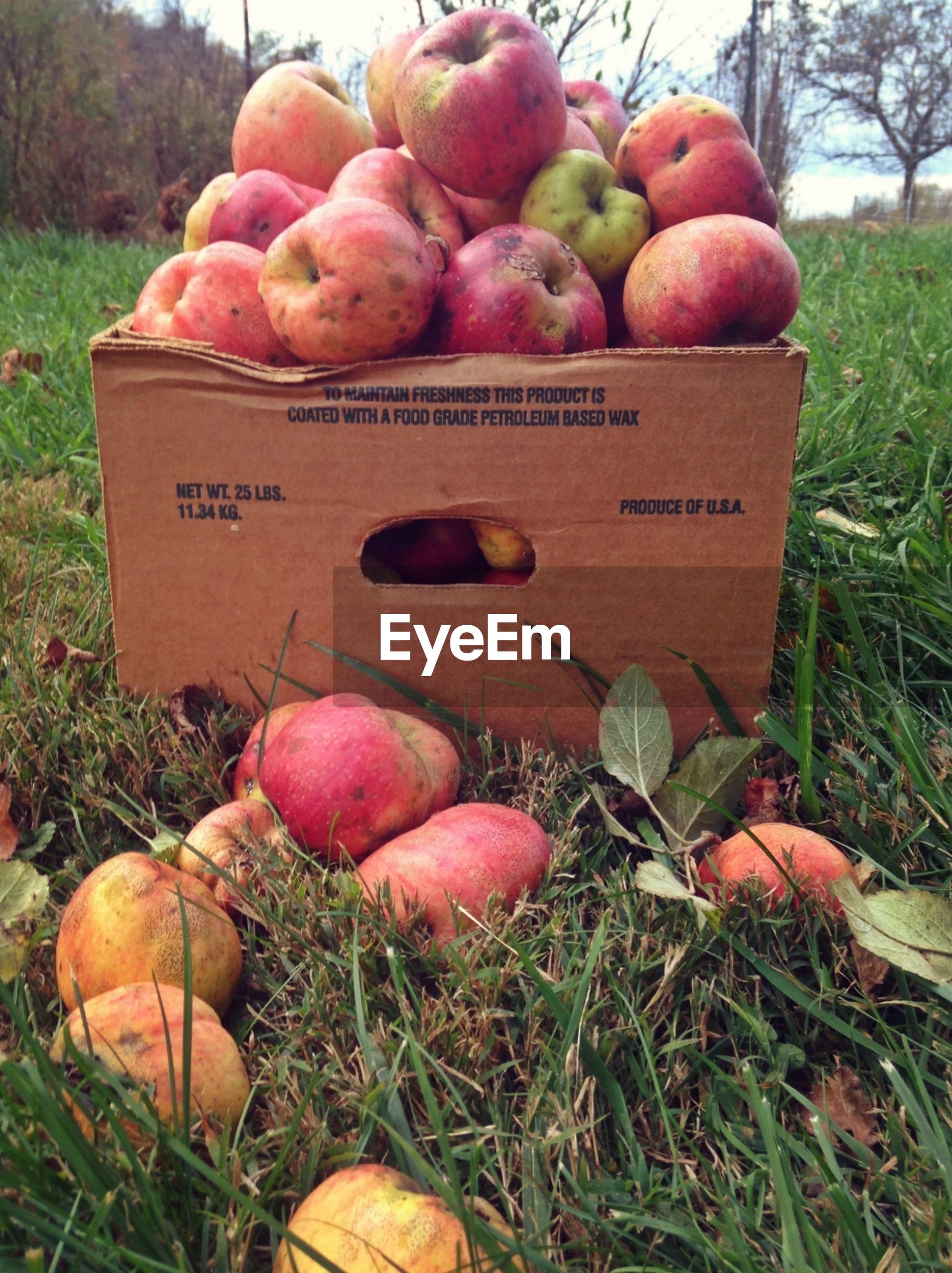 Close of rotting apples in box