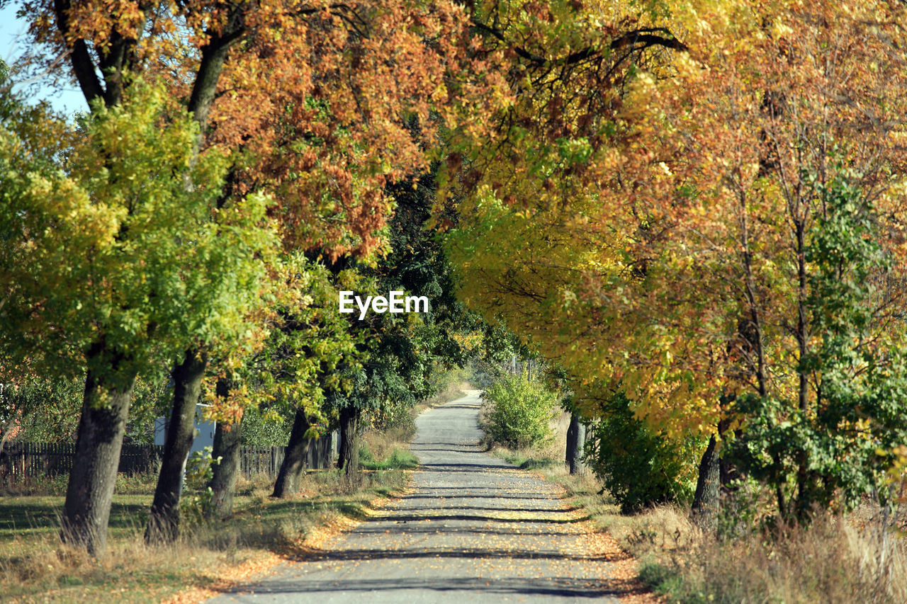autumn, tree, nature, the way forward, road, forest, landscape, scenics, no people, beauty in nature, outdoors, day