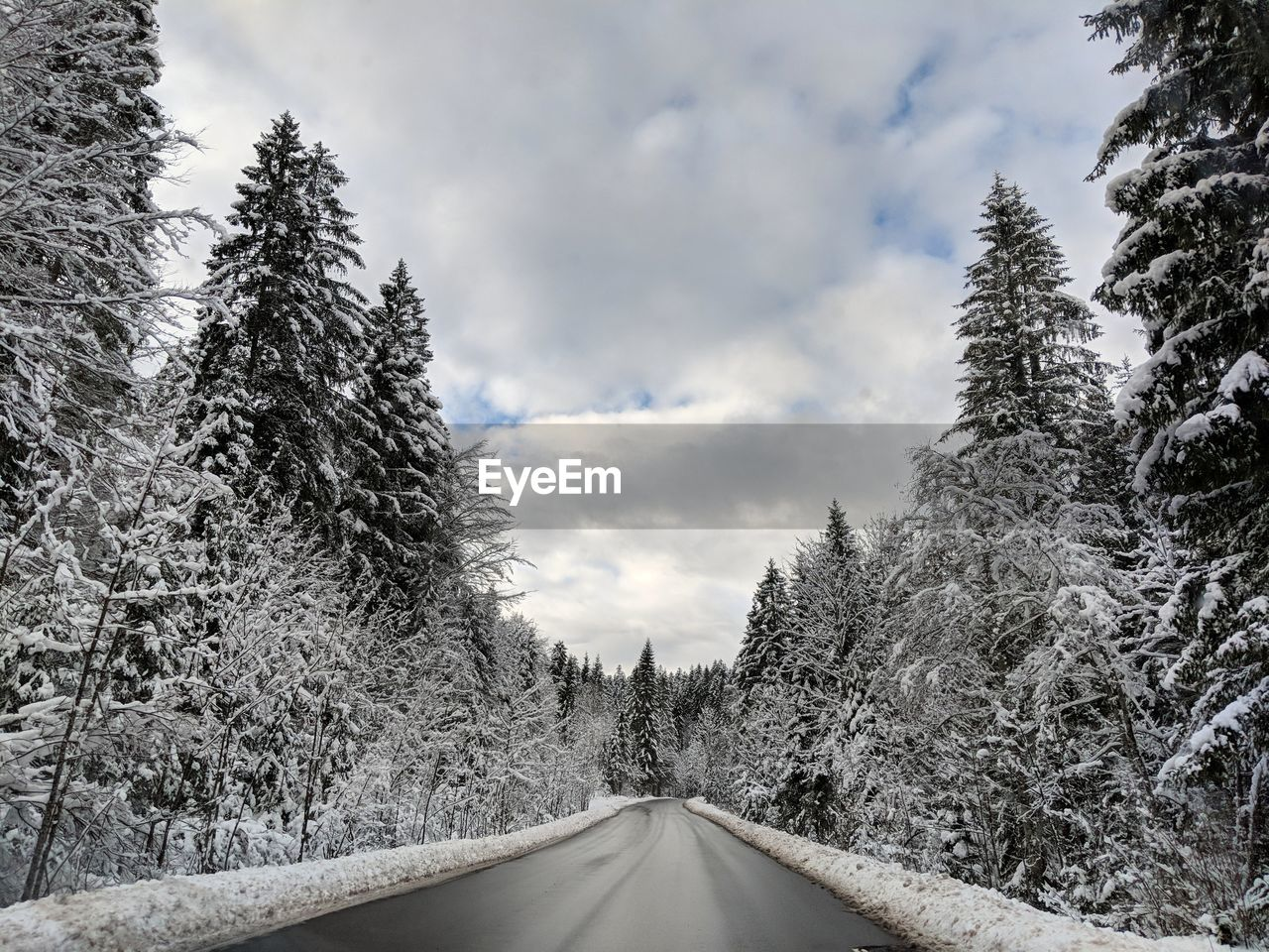 tree, the way forward, nature, snow, road, winter, no people, cold temperature, sky, weather, cloud - sky, day, beauty in nature, tranquility, transportation, scenics, growth, landscape, outdoors, forest