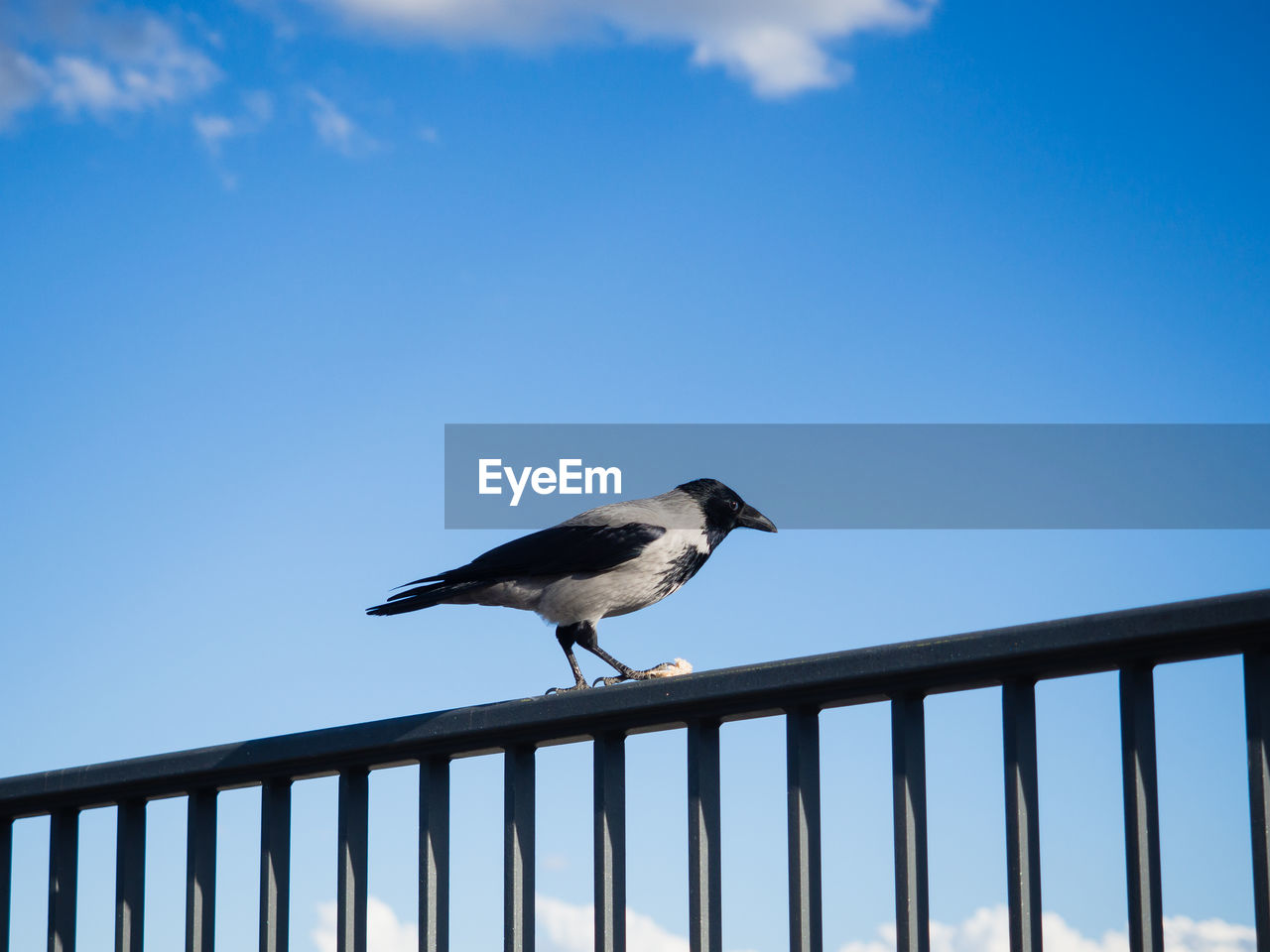 Crow Perching On Railing Against Sky