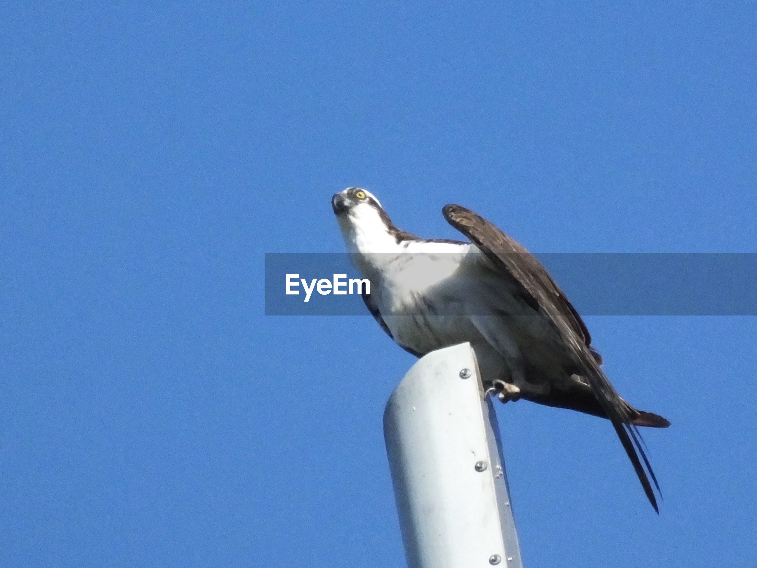 LOW ANGLE VIEW OF SEAGULL PERCHING ON A CLEAR SKY