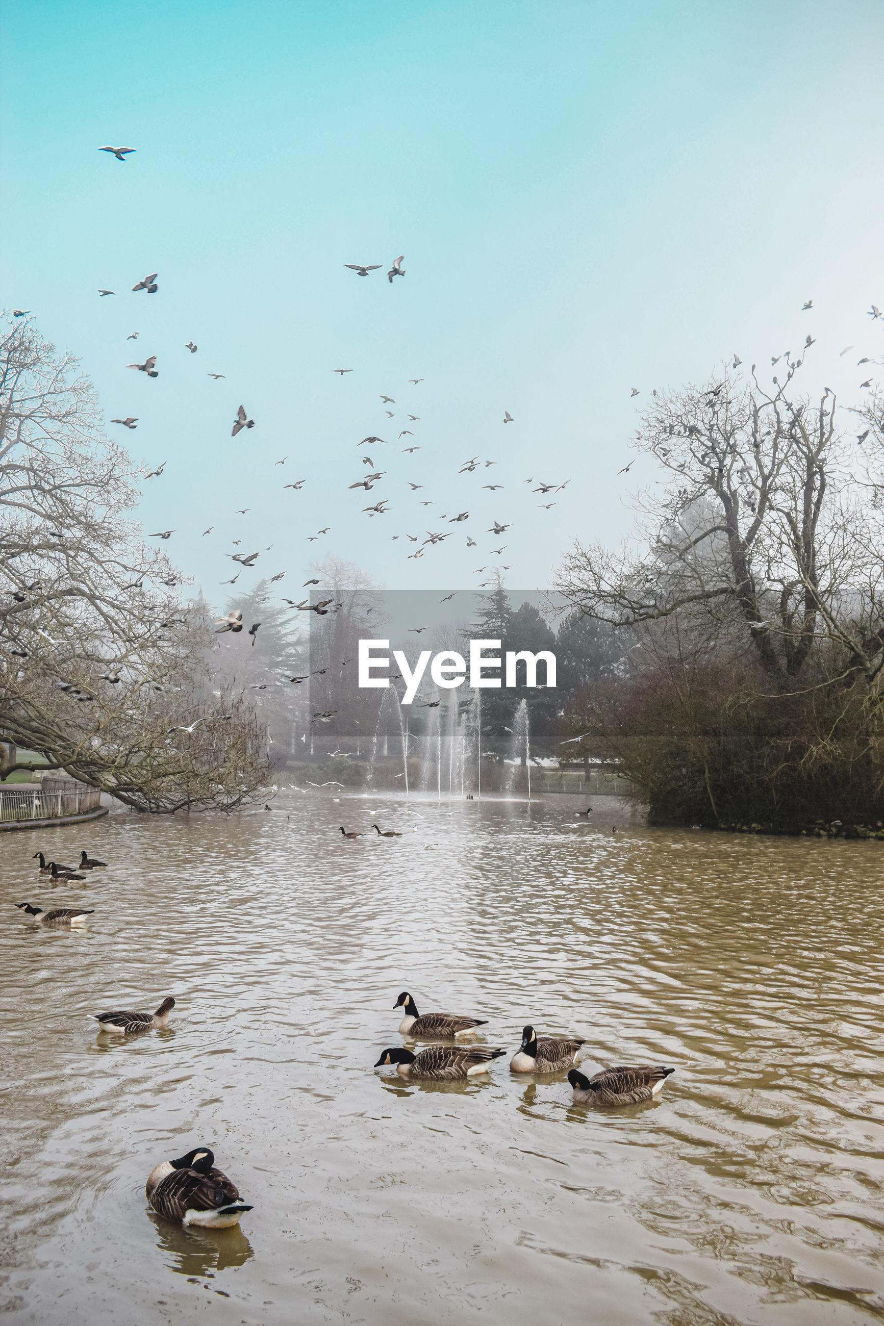 BIRDS FLYING OVER LAKE AGAINST SKY