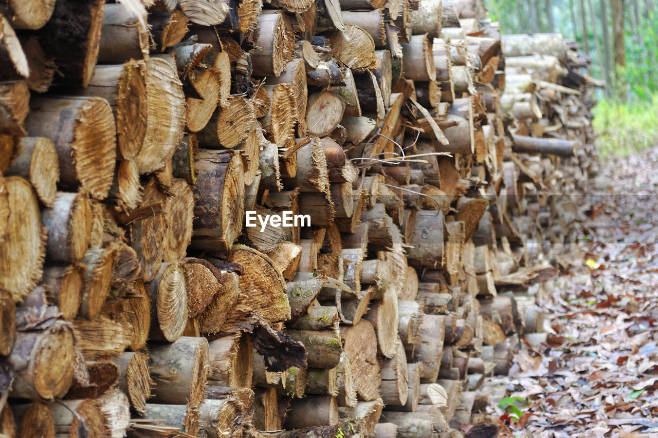 large group of objects, abundance, no people, forest, day, timber, log, stack, wood - material, firewood, lumber industry, tree, wood, nature, deforestation, focus on foreground, outdoors, brown, close-up, heap, woodpile