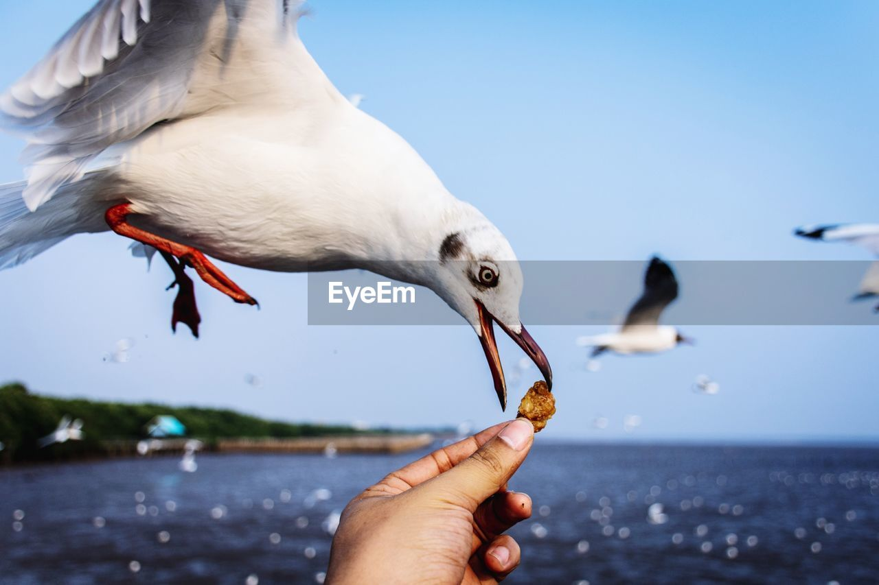 animal themes, animal, animal wildlife, bird, animals in the wild, hand, vertebrate, water, human hand, focus on foreground, nature, human body part, sky, group of animals, holding, day, feeding, seagull, eating, outdoors, finger