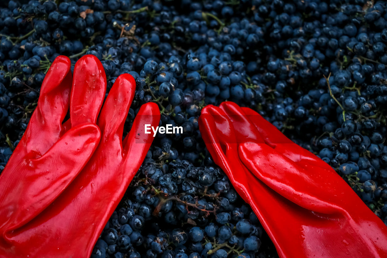 red, berry fruit, fruit, healthy eating, no people, day, close-up, high angle view, freshness, food and drink, nature, food, low section, abundance, outdoors, body part, black color, wellbeing, wet