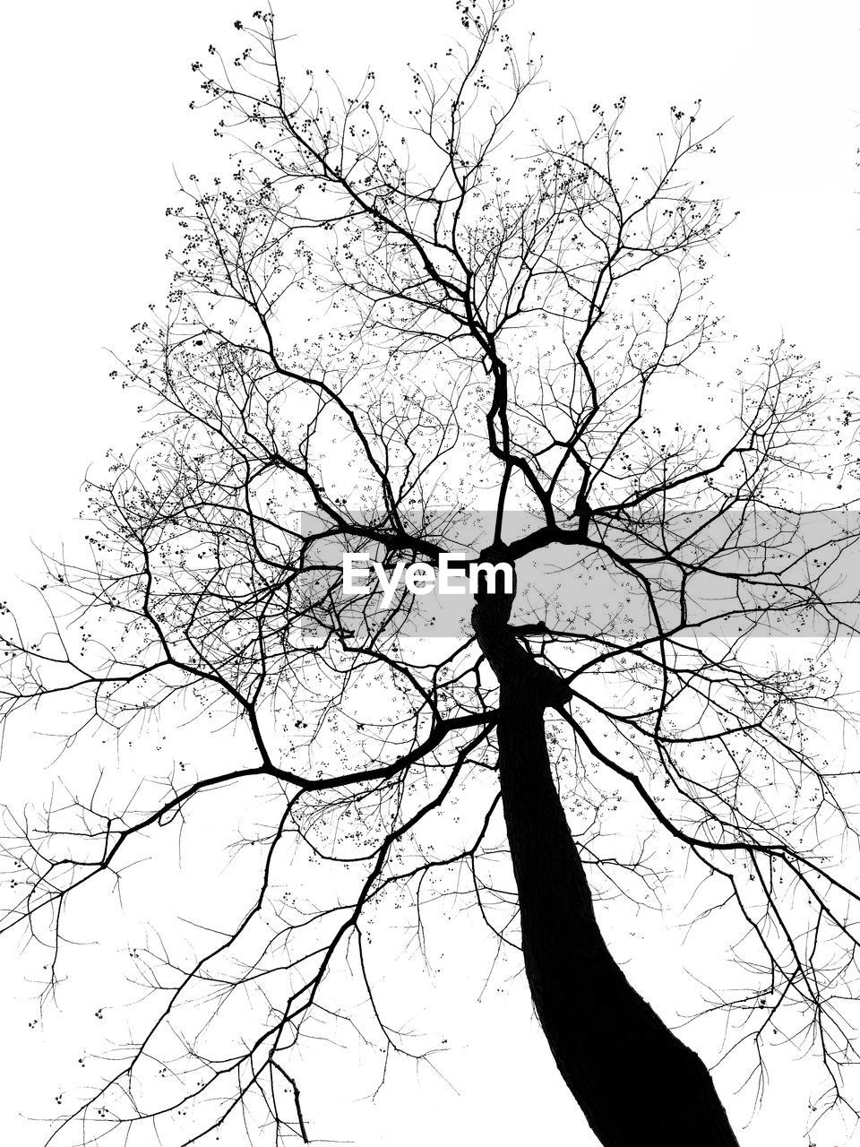 bare tree, branch, tree, silhouette, low angle view, nature, tranquility, sky, beauty in nature, tree trunk, lone, outdoors, no people, clear sky, day