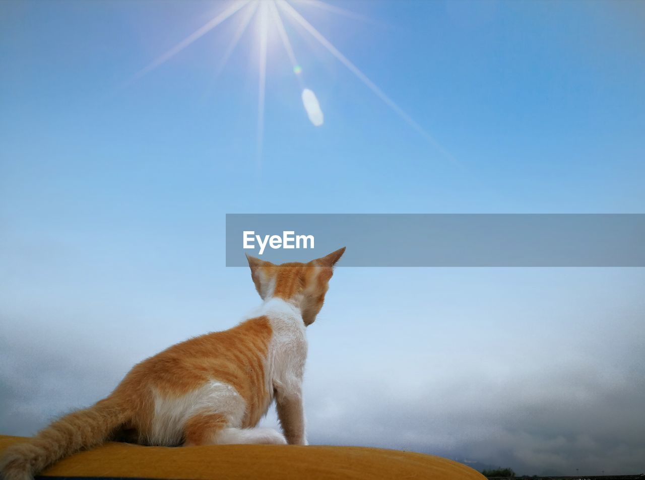 mammal, domestic, pets, domestic animals, animal, one animal, animal themes, cat, sky, domestic cat, feline, vertebrate, lens flare, sunlight, sunbeam, no people, nature, sun, day, looking, ginger cat, whisker