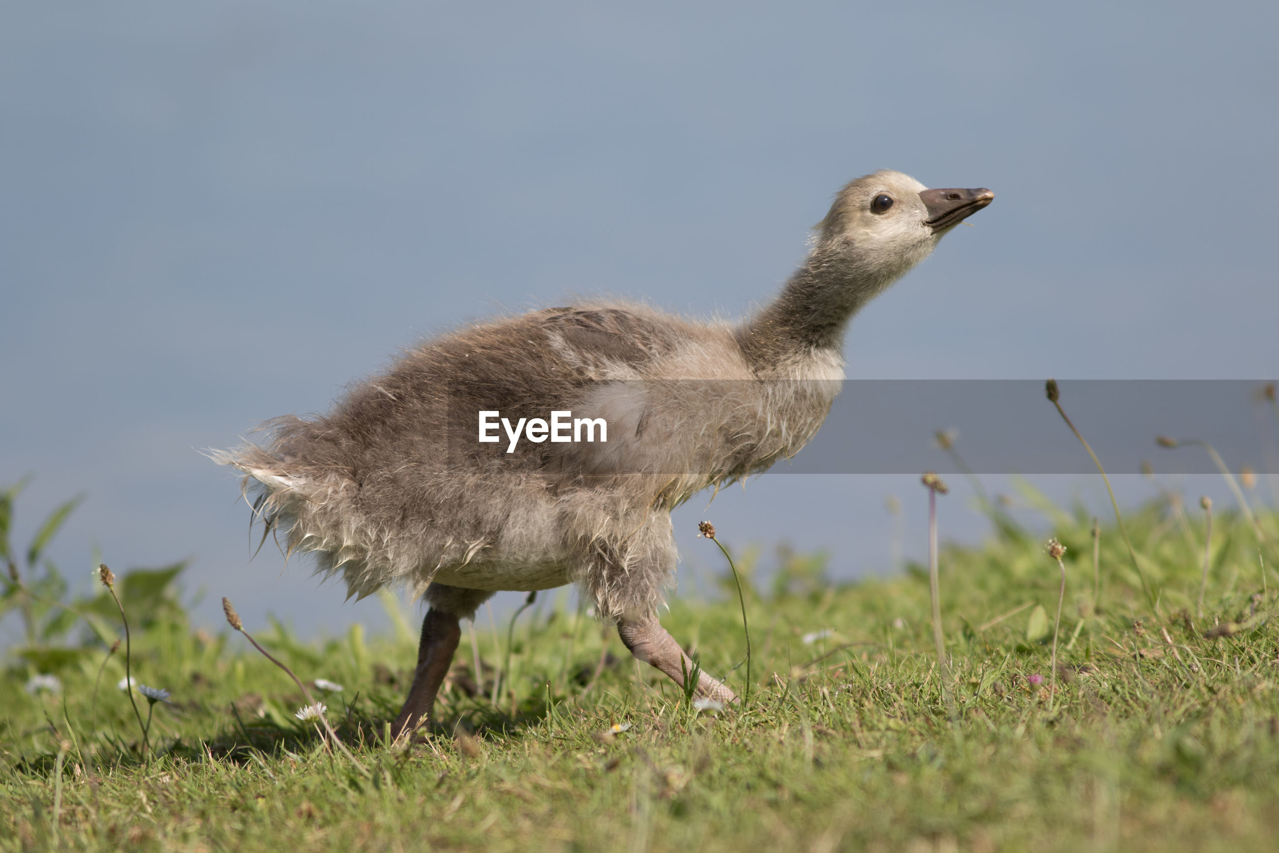SIDE VIEW OF BIRD ON GRASS