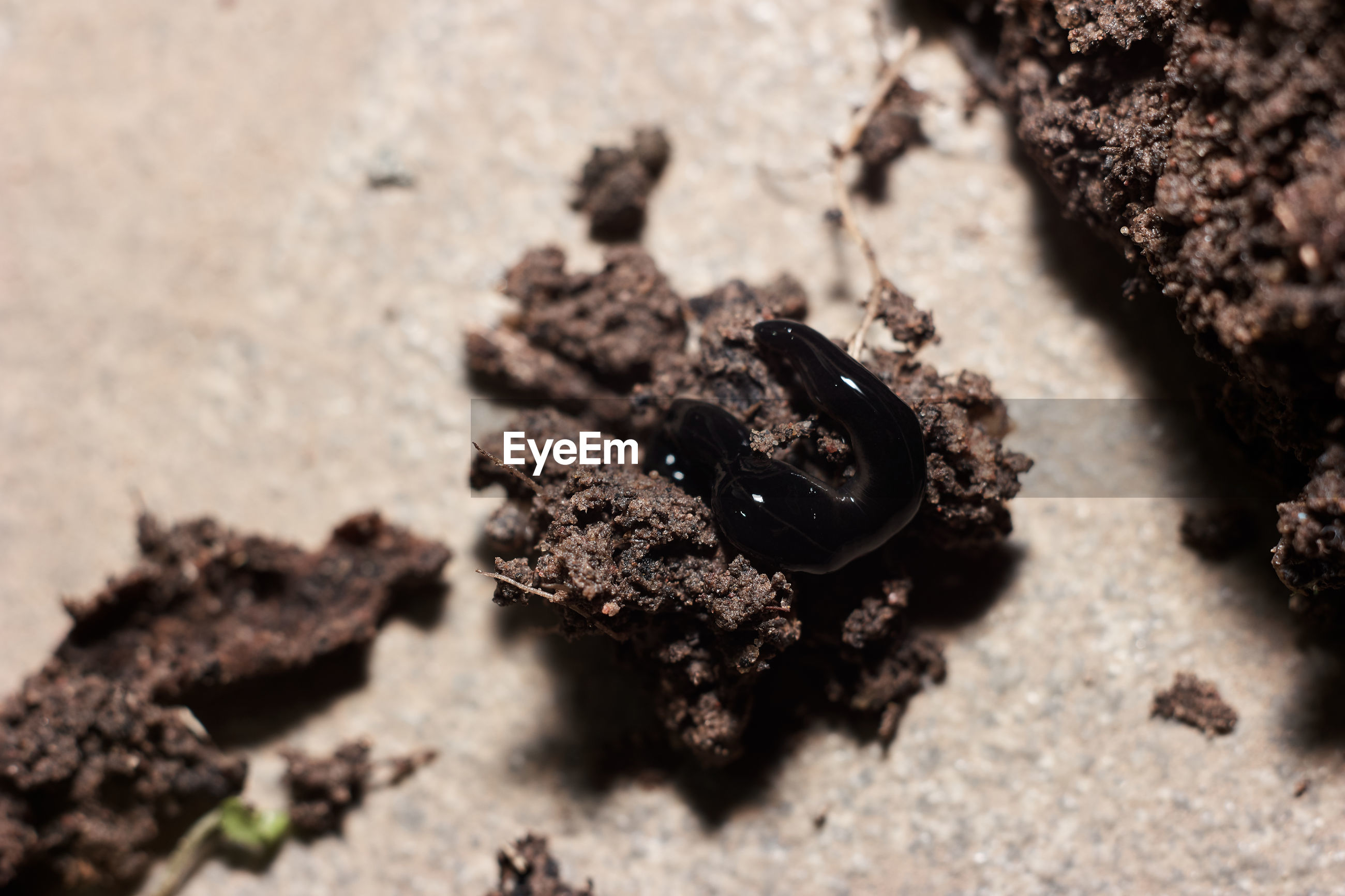 Extreme close-up of worm on soil