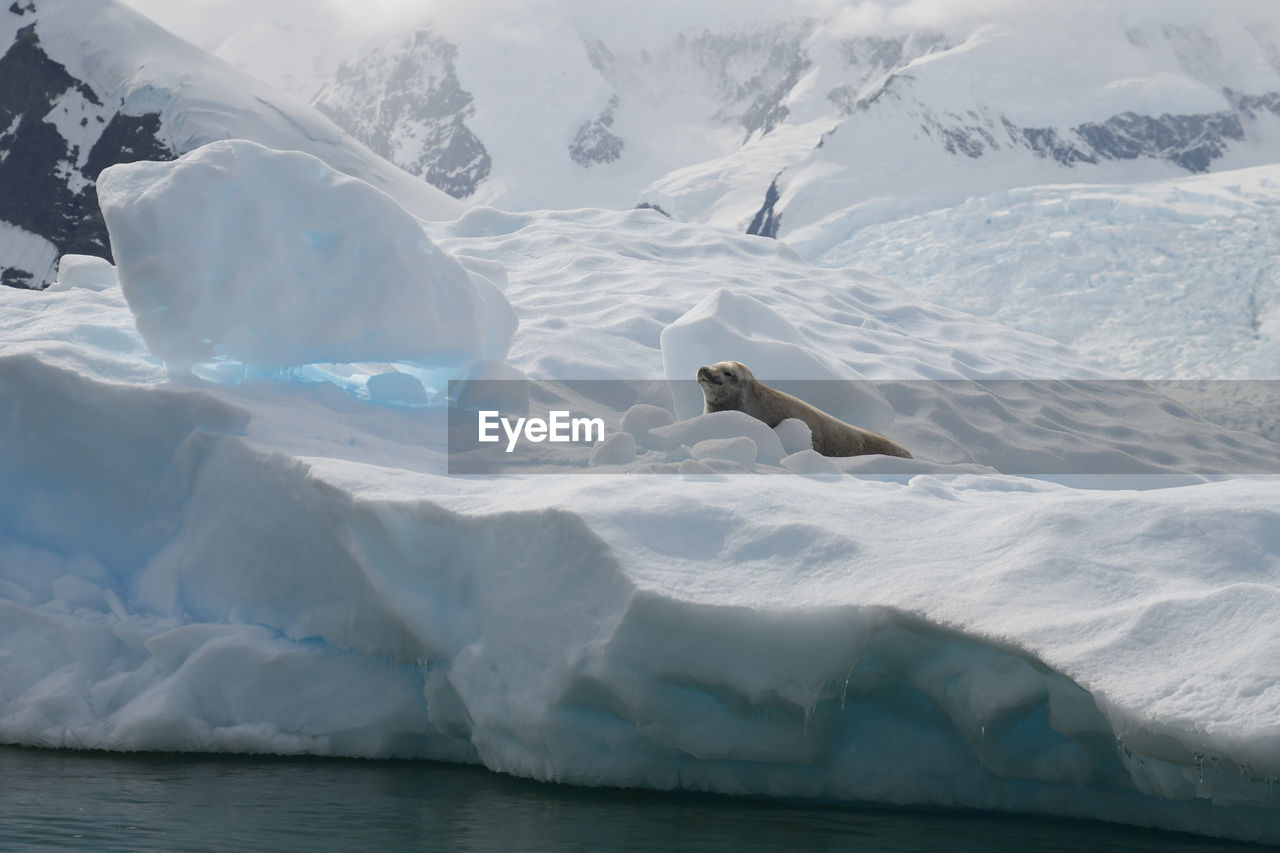 View of seal in snow