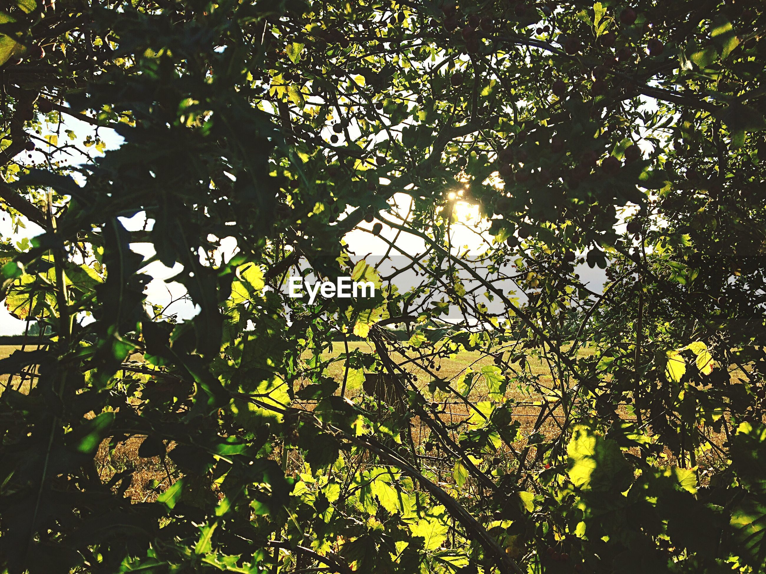 nature, tree, backgrounds, growth, sunlight, low angle view, beauty in nature, no people, sky, green color, full frame, outdoors, branch, summer, tranquility, day, close-up, lush - description