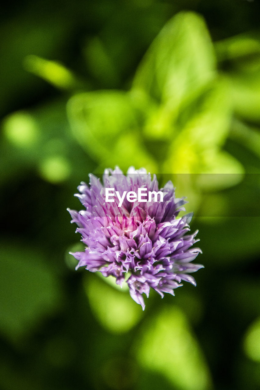 nature, flower, growth, beauty in nature, purple, no people, plant, close-up, fragility, freshness, outdoors, day