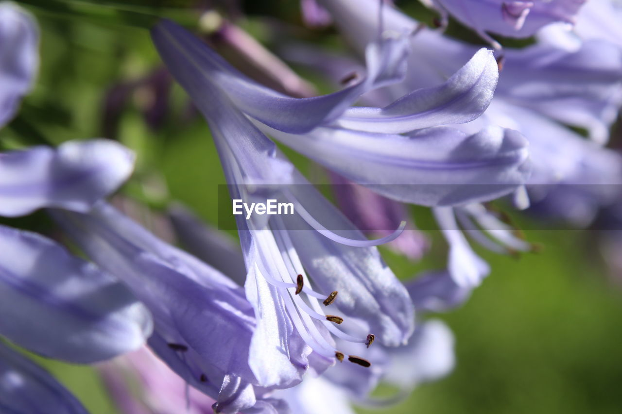 flower, petal, nature, purple, fragility, growth, beauty in nature, plant, outdoors, no people, freshness, day, close-up, flower head