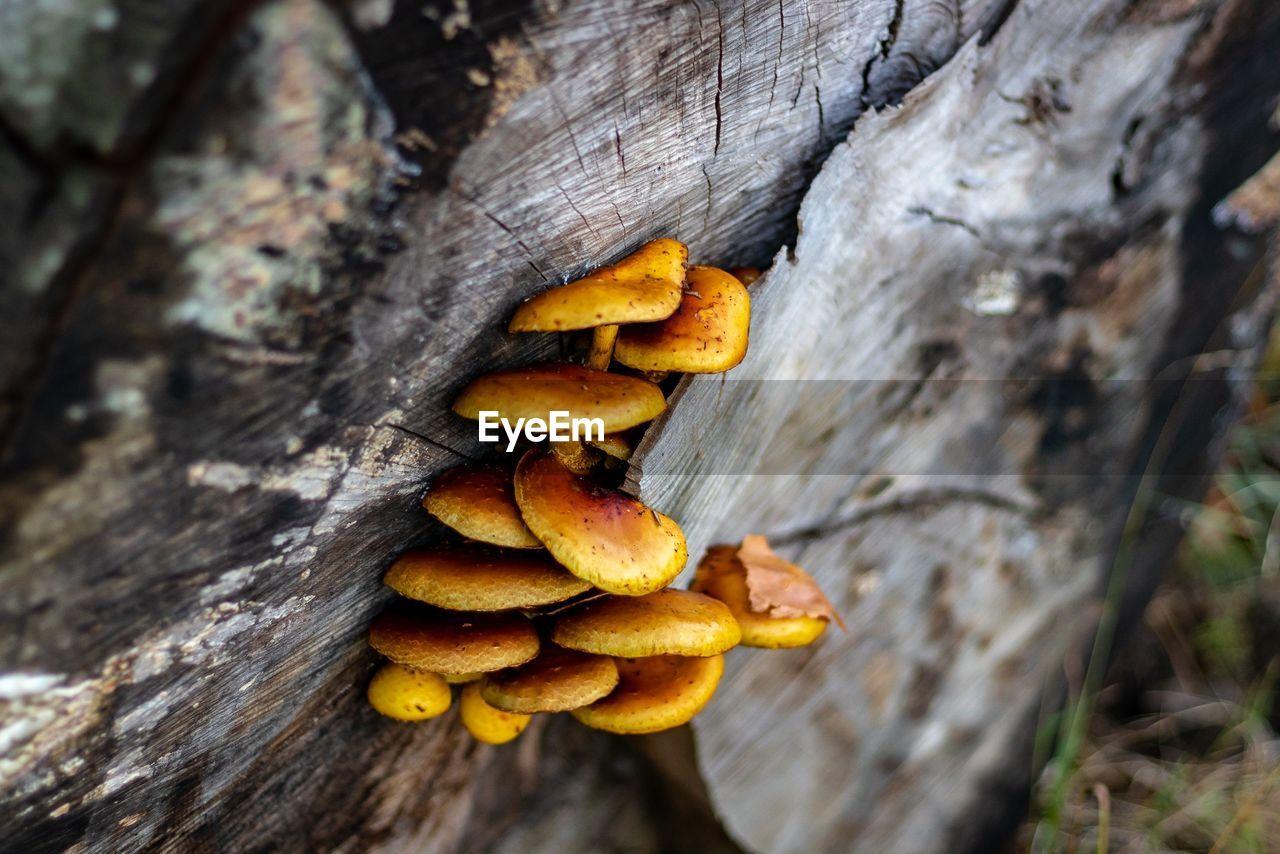 Close-up of mushrooms growing on tree stump