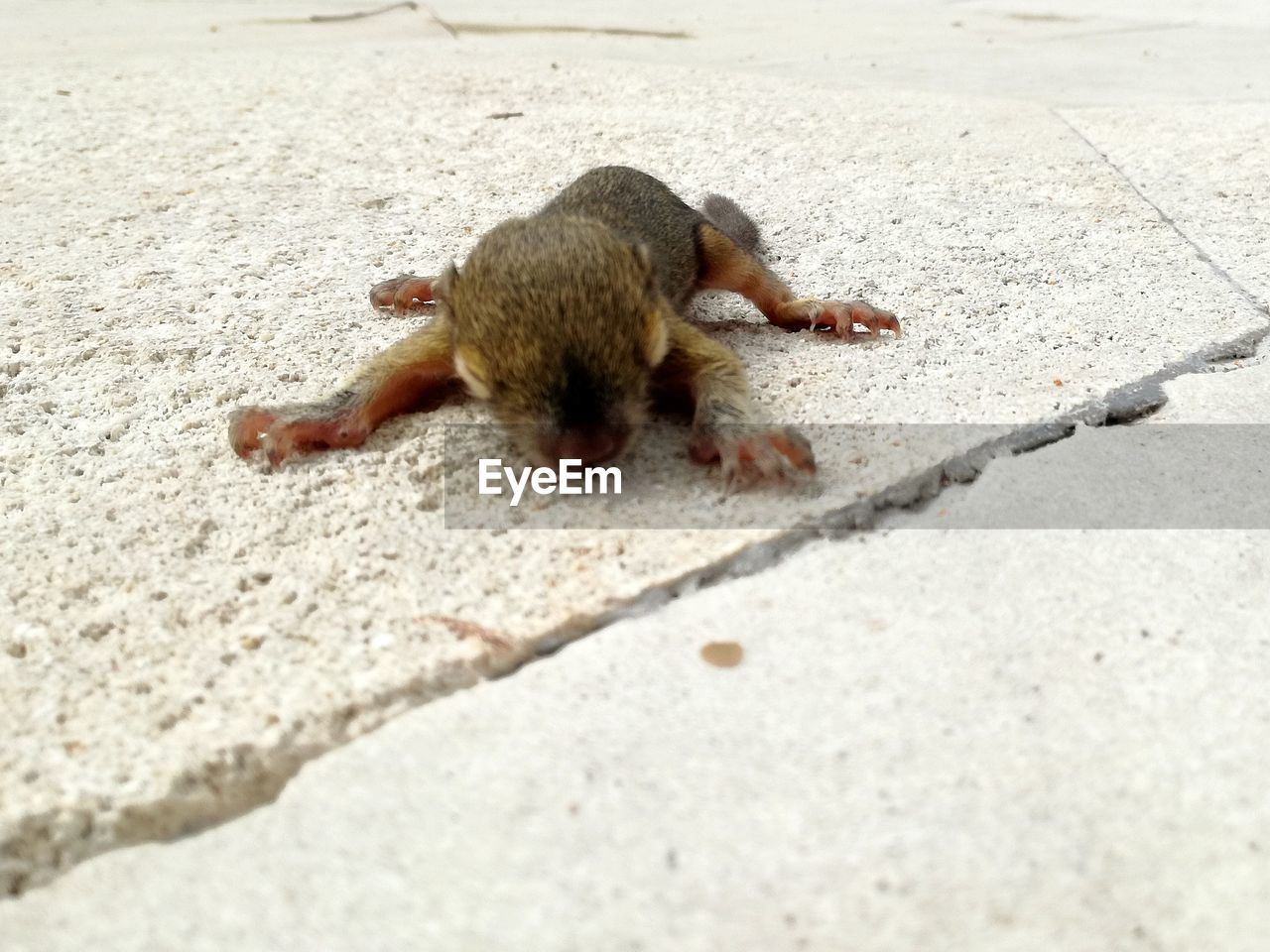 one animal, animal themes, animals in the wild, outdoors, day, squirrel, mammal, full length, nature, no people, close-up
