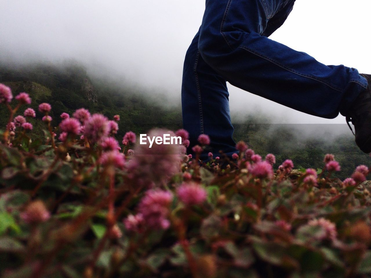 Low section of man running on flowerbed