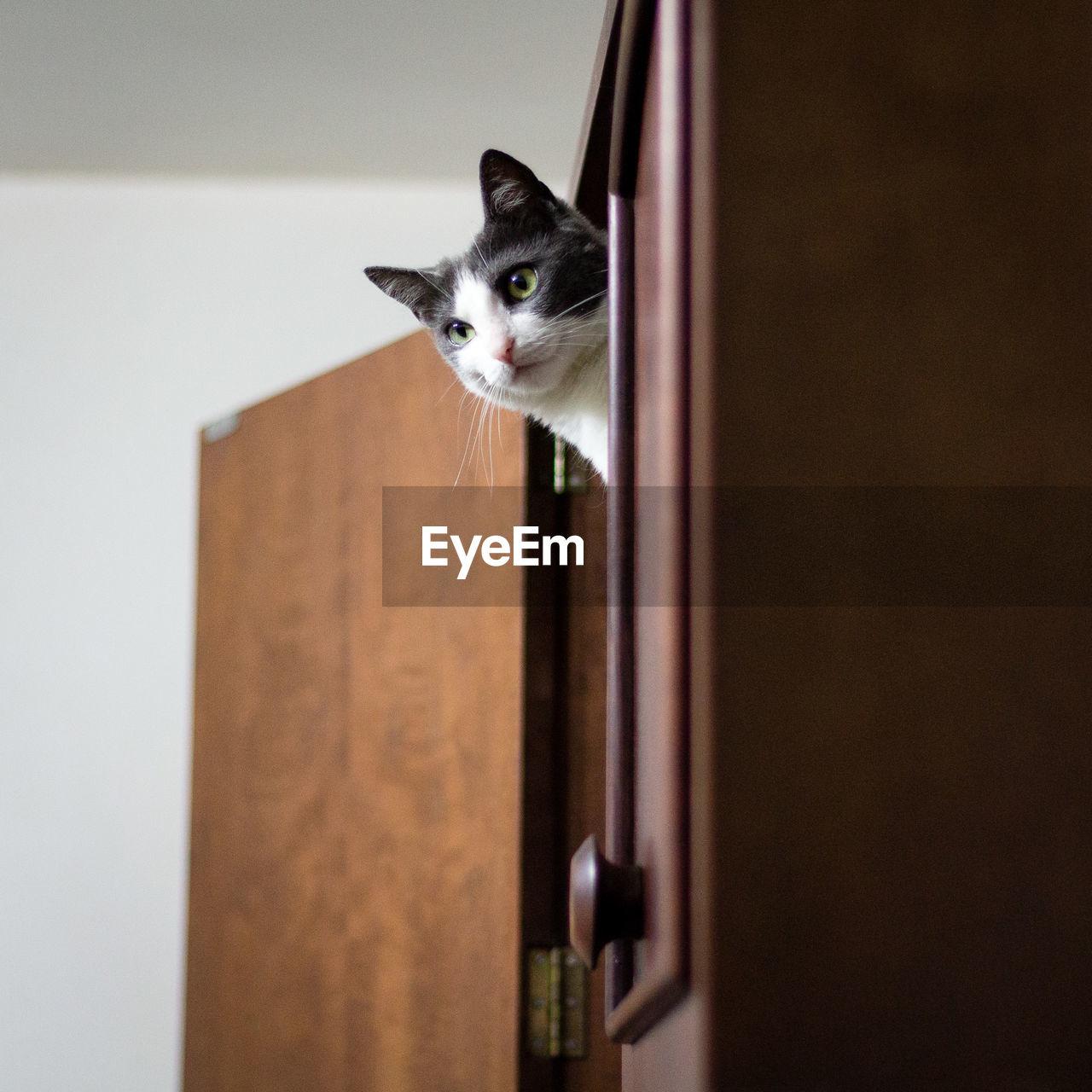 Cat Peeking Through Wooden Cabinet At Home