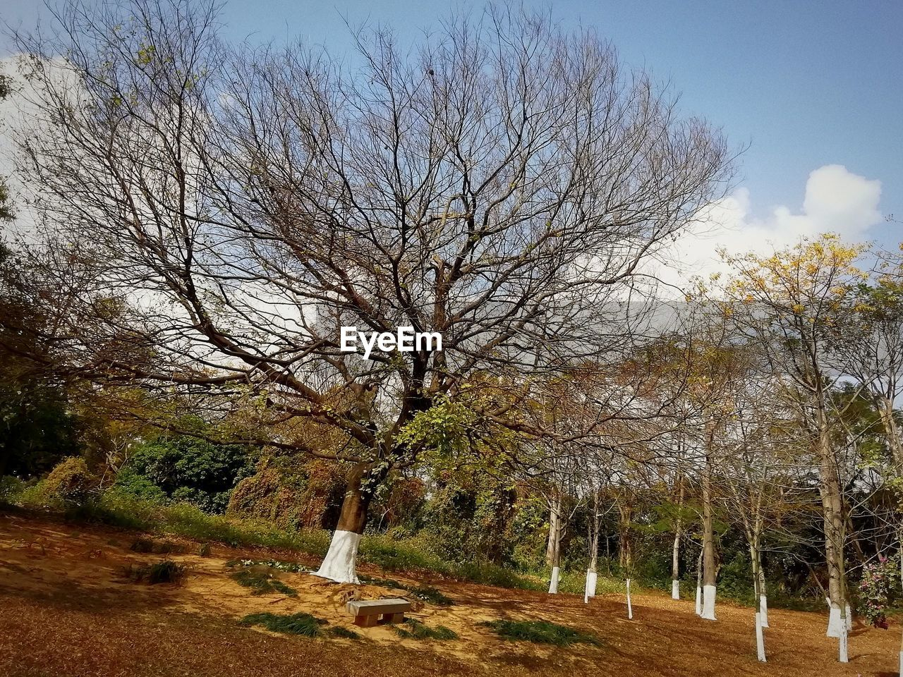 tree, plant, bare tree, sky, nature, land, no people, branch, tranquility, day, field, tranquil scene, beauty in nature, autumn, landscape, non-urban scene, growth, environment, scenics - nature, outdoors, change, fall