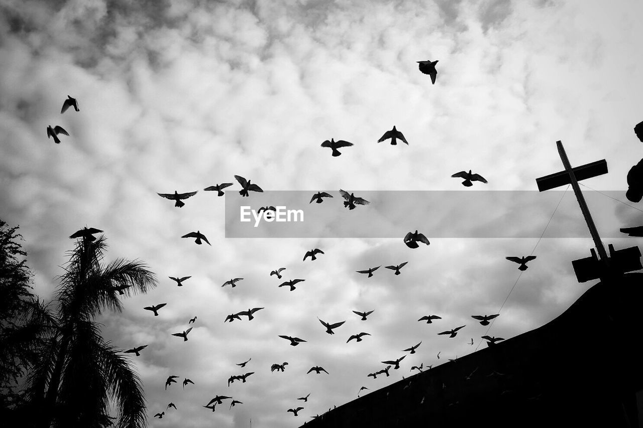 Low angle view of birds flying against clouds