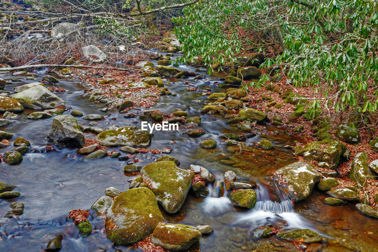 water, nature, rock, day, no people, stream - flowing water, plant, river, solid, beauty in nature, flowing water, rock - object, motion, forest, land, high angle view, outdoors, flowing, shallow, running water
