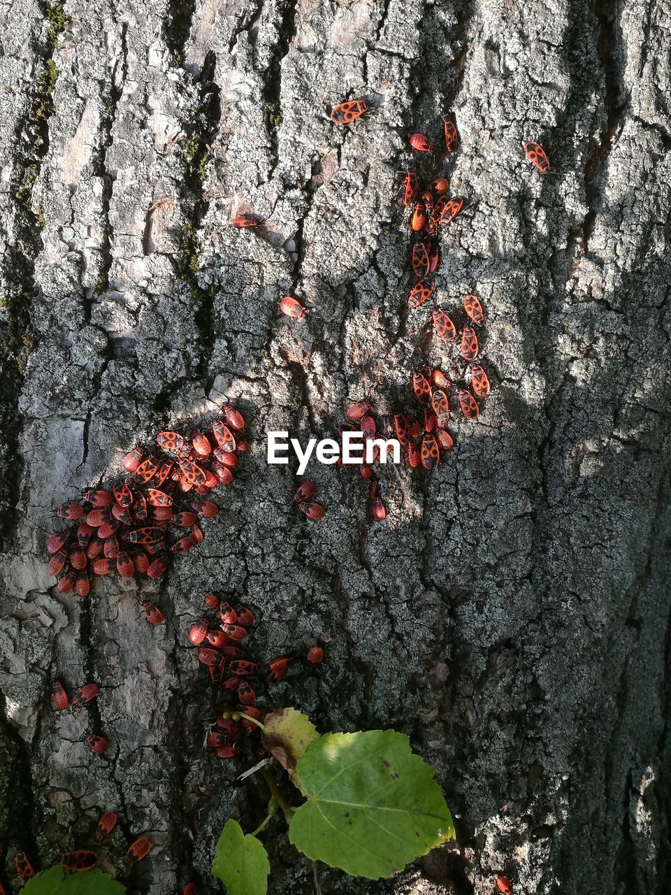 growth, red, tree, no people, tree trunk, outdoors, nature, day, close-up