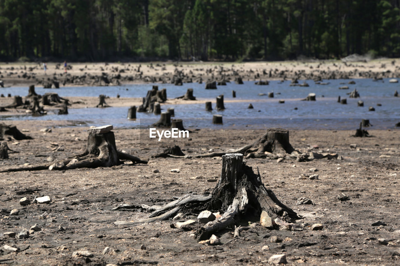 Tree Stumps On Field At Forest