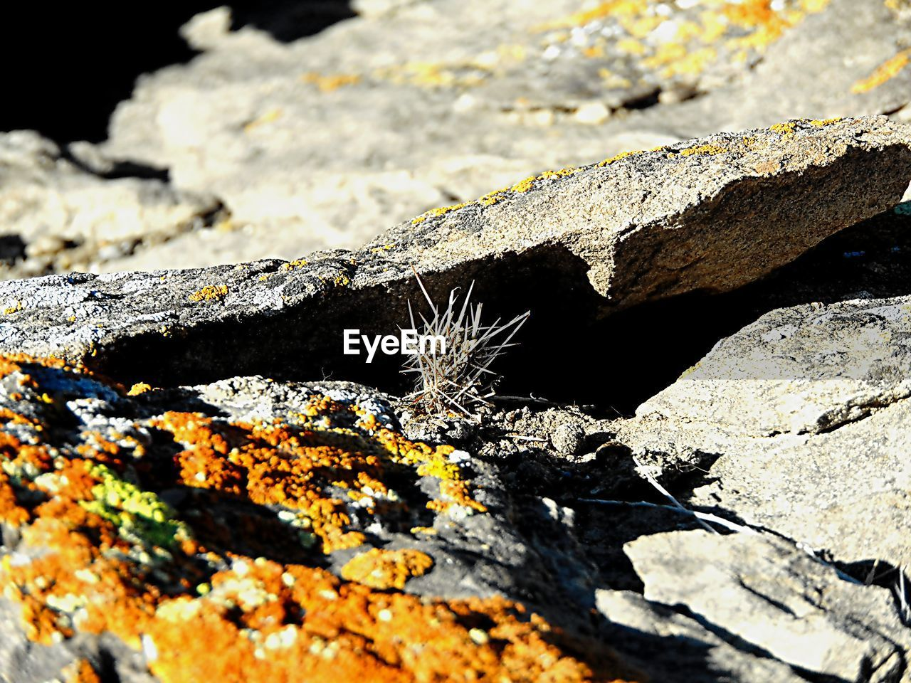 nature, sunlight, day, outdoors, close-up, no people, rock - object, textured, shadow, beauty in nature