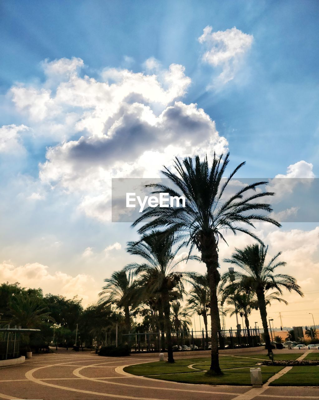 cloud - sky, palm tree, tree, sky, tropical climate, plant, nature, no people, road, growth, beauty in nature, transportation, outdoors, scenics - nature, tranquility, street, date palm tree, city, tranquil scene, sunset, tropical tree, treelined, coconut palm tree