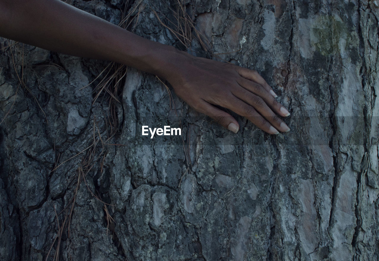 Close-up of hand on tree trunk