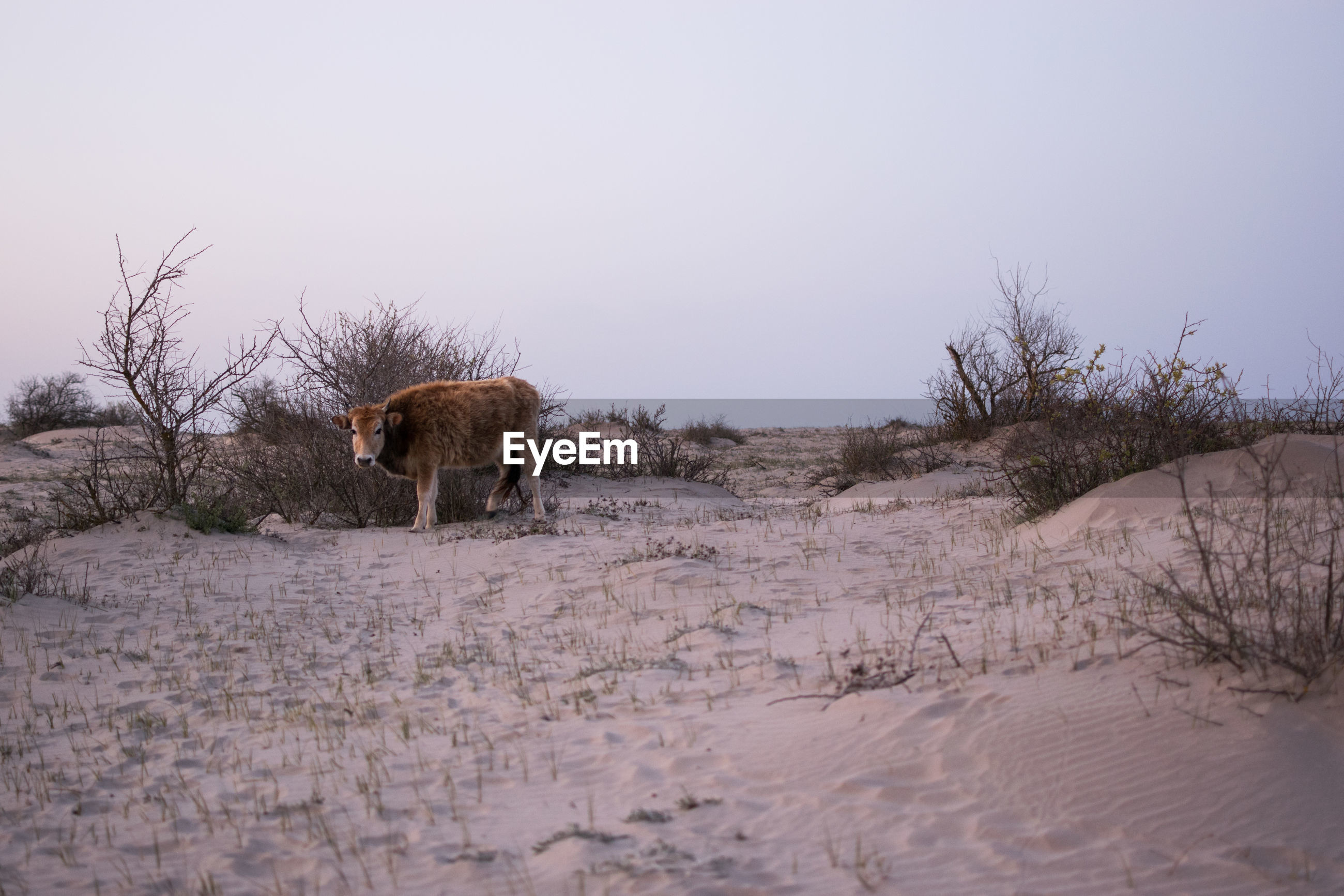 View of horse on sandy beach