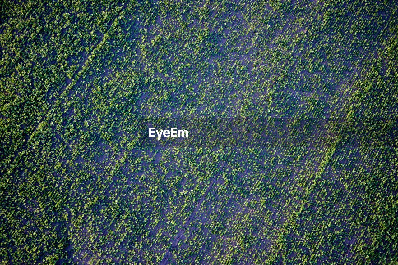 full frame, backgrounds, pattern, rural scene, field, no people, agriculture, aerial view, environment, nature, plant, high angle view, green color, land, beauty in nature, multi colored, landscape, farm, day, scenics - nature, outdoors, purple