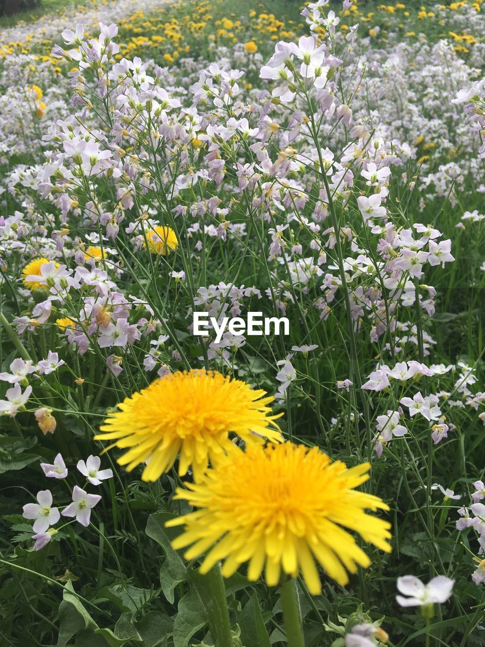 flowering plant, flower, fragility, vulnerability, freshness, plant, beauty in nature, yellow, growth, flower head, petal, inflorescence, nature, close-up, field, no people, day, high angle view, land, outdoors, springtime, pollen, flowerbed