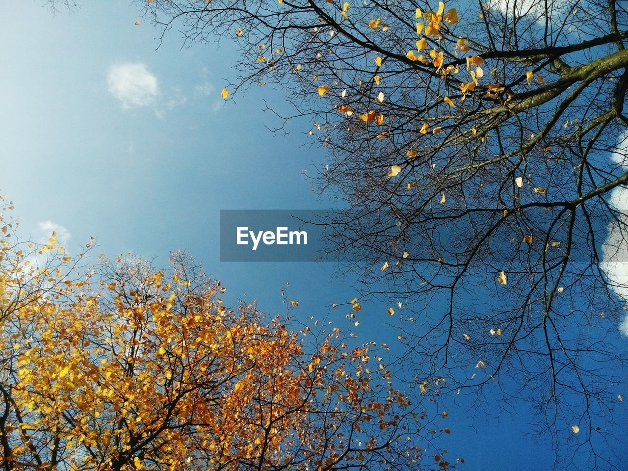 tree, nature, beauty in nature, branch, low angle view, no people, growth, day, autumn, tranquility, outdoors, sky, flower, clear sky, freshness, bare tree, fragility