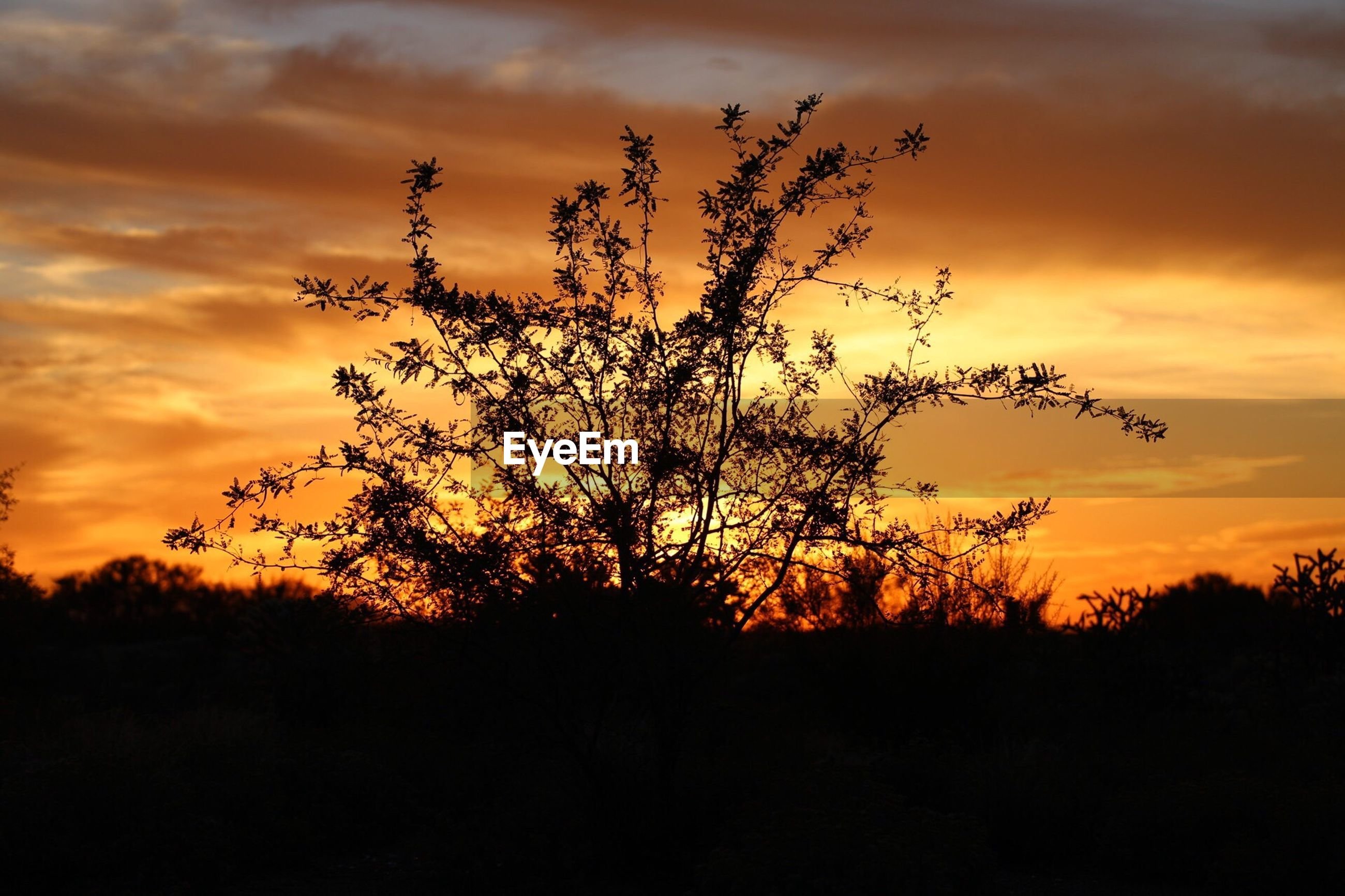 sunset, silhouette, beauty in nature, scenics, tranquil scene, tranquility, nature, tree, growth, landscape, sky, idyllic, branch, orange color, dramatic sky, dark, outdoors, non-urban scene, cloud - sky, plant, sun, field, majestic, remote, outline, moody sky, atmosphere, atmospheric mood, vibrant color, no people