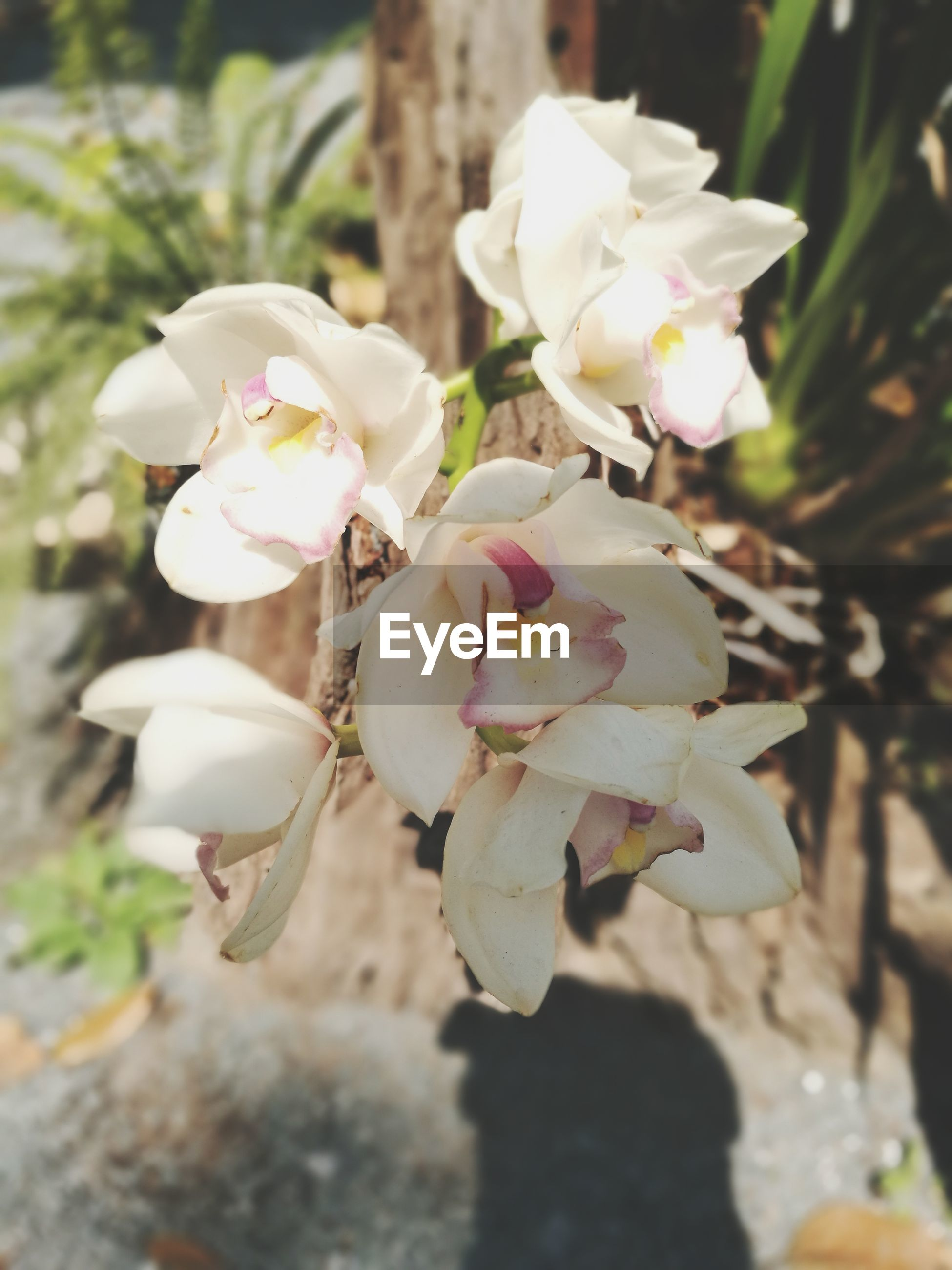 flower, petal, white color, beauty in nature, fragility, nature, freshness, close-up, flower head, no people, growth, outdoors, day, plant, blooming
