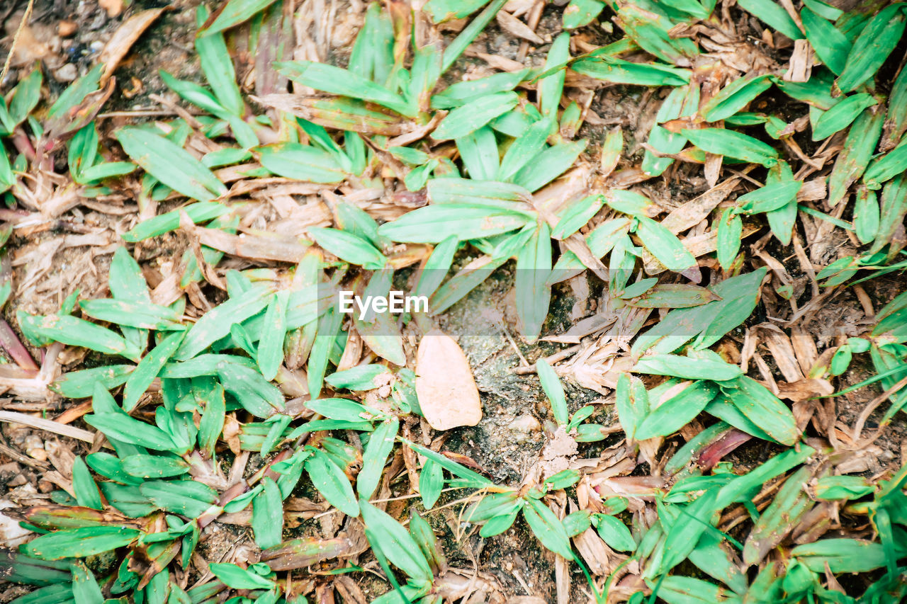 field, leaf, green color, high angle view, day, no people, nature, close-up, outdoors, full frame, grass
