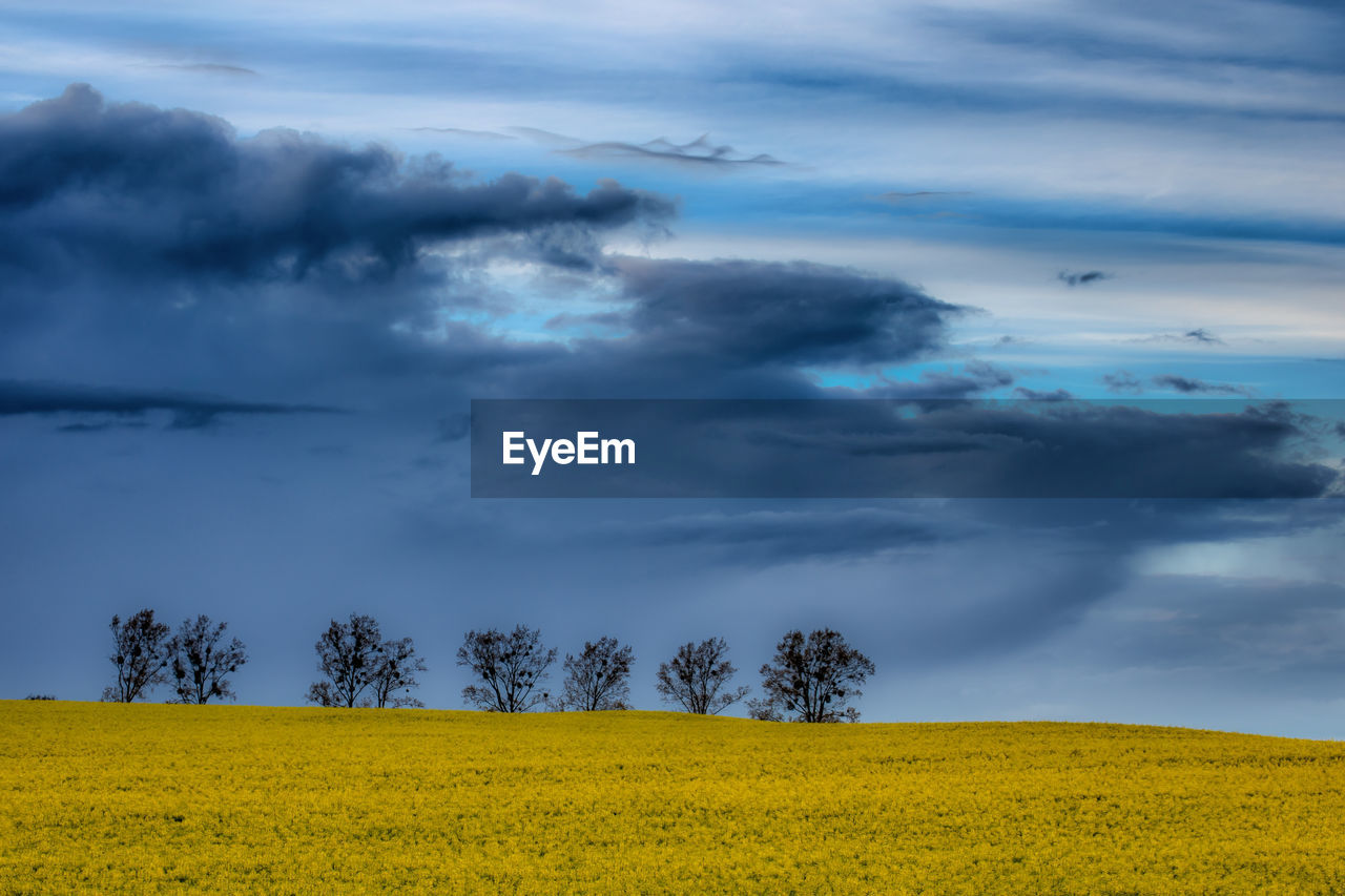 cloud - sky, sky, beauty in nature, plant, environment, landscape, tranquility, tranquil scene, land, field, scenics - nature, tree, nature, yellow, no people, growth, non-urban scene, overcast, day, outdoors, power in nature