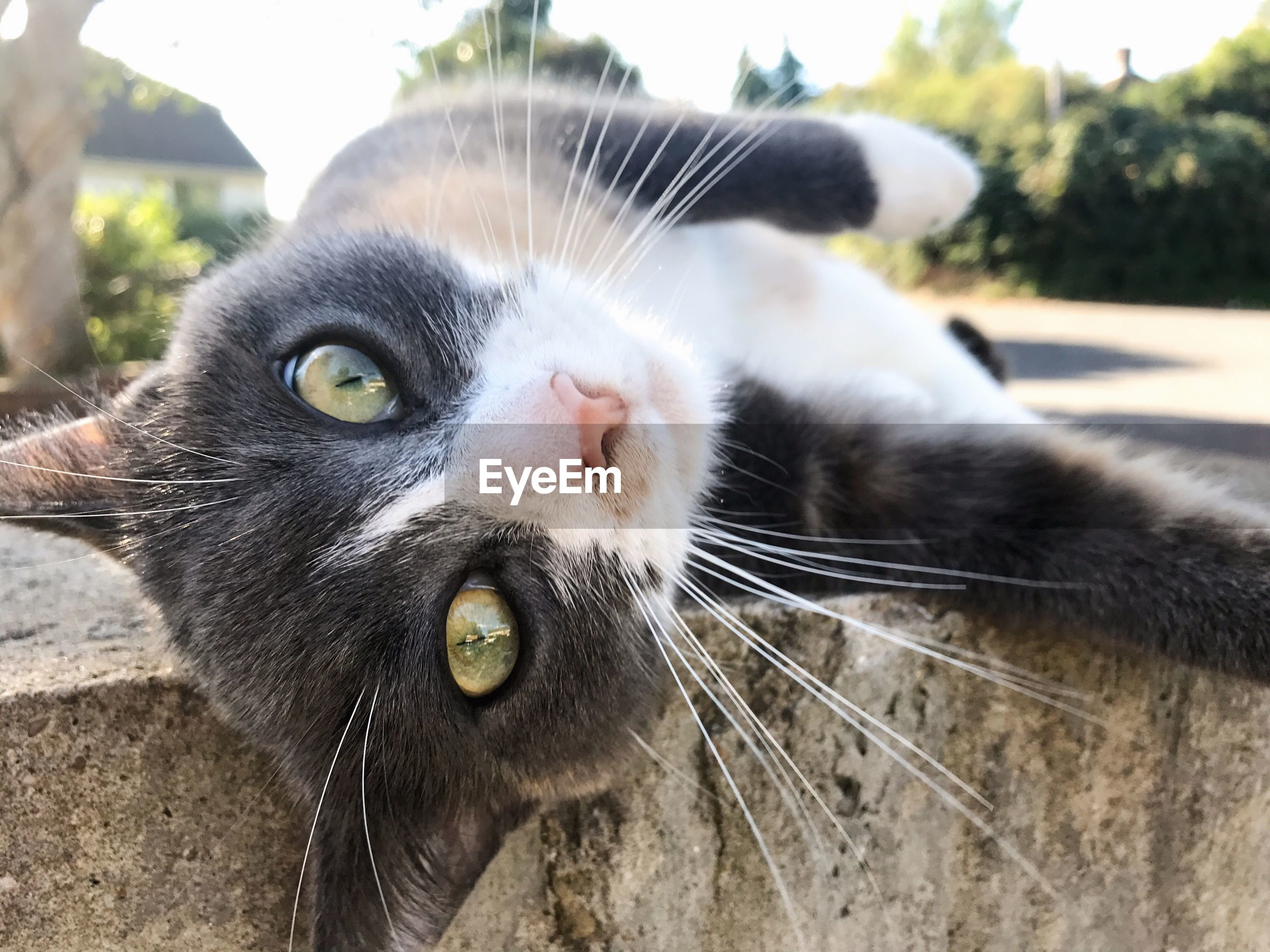 Close-up portrait of cat lying on retaining wall
