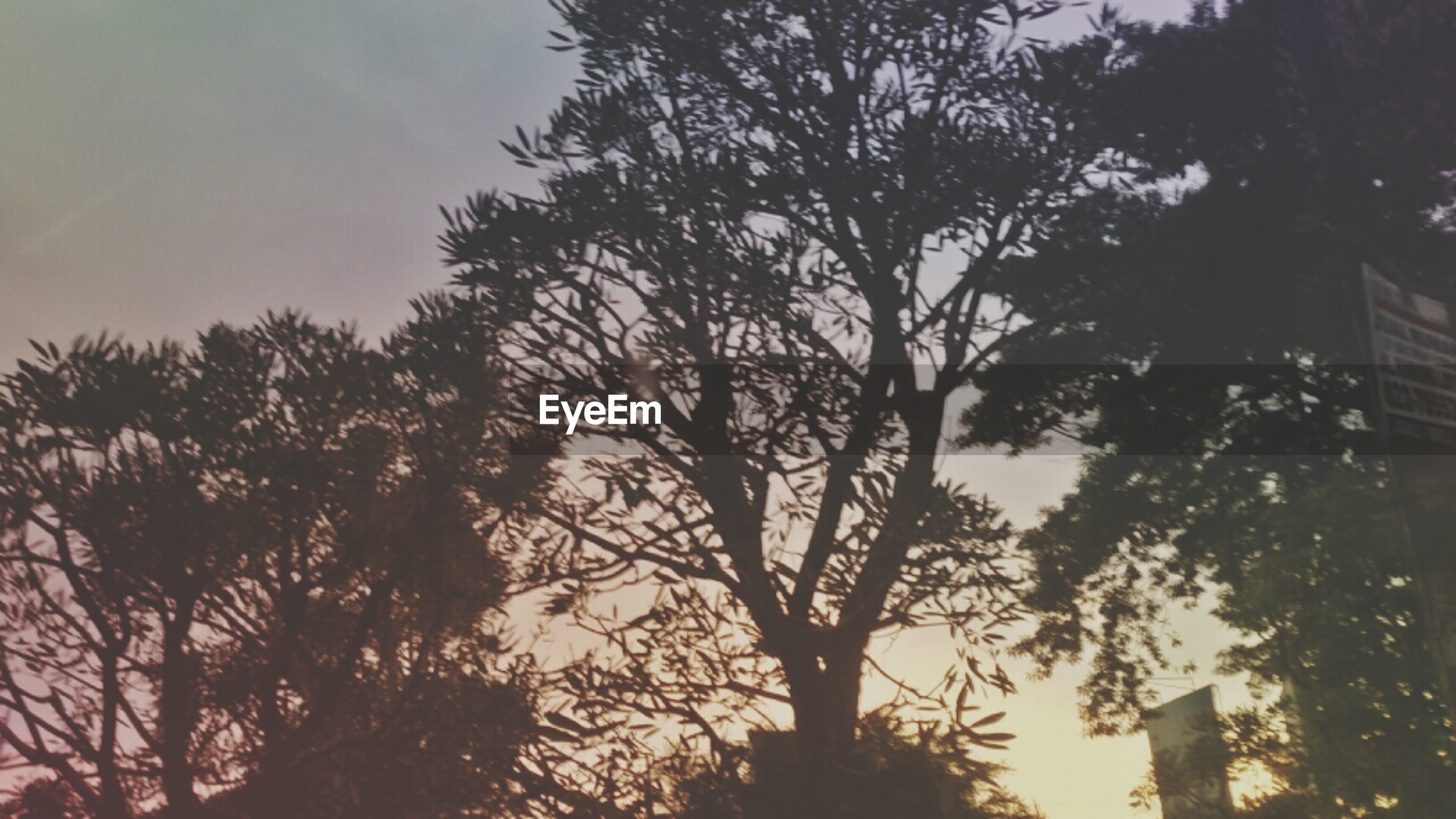 tree, silhouette, sunset, low angle view, tranquility, branch, sky, growth, beauty in nature, nature, tranquil scene, scenics, tree trunk, outdoors, no people, idyllic, bare tree, dusk, sunlight, forest