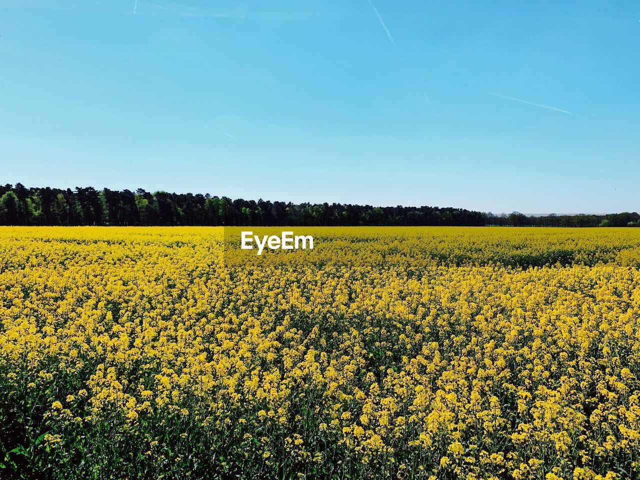 yellow, beauty in nature, landscape, land, sky, scenics - nature, tranquil scene, field, plant, tranquility, growth, flower, agriculture, oilseed rape, nature, rural scene, environment, flowering plant, day, freshness, no people, outdoors