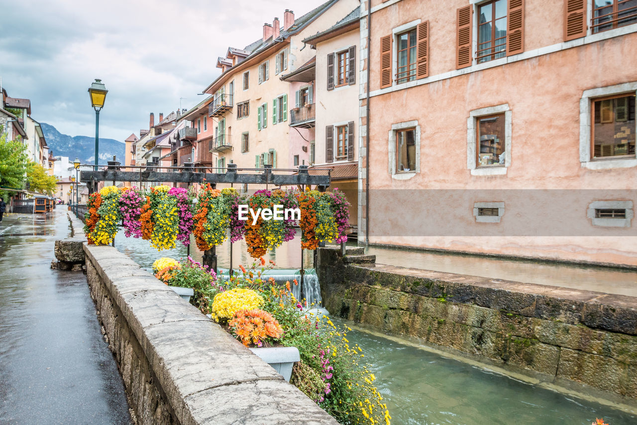architecture, building exterior, built structure, flower, flowering plant, water, plant, nature, canal, city, building, day, residential district, no people, sky, bridge, connection, outdoors