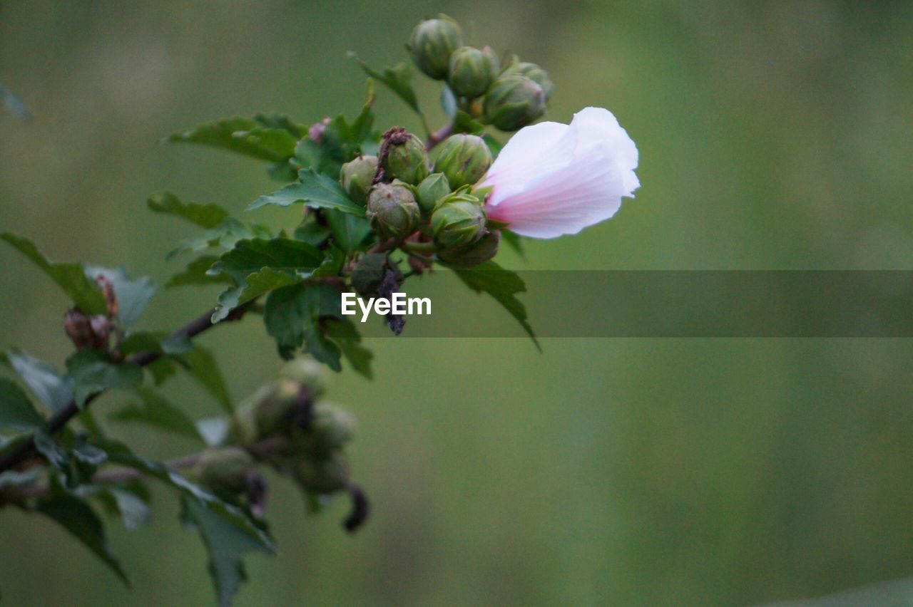 flower, growth, nature, petal, fragility, plant, beauty in nature, blooming, no people, freshness, focus on foreground, outdoors, flower head, day, close-up