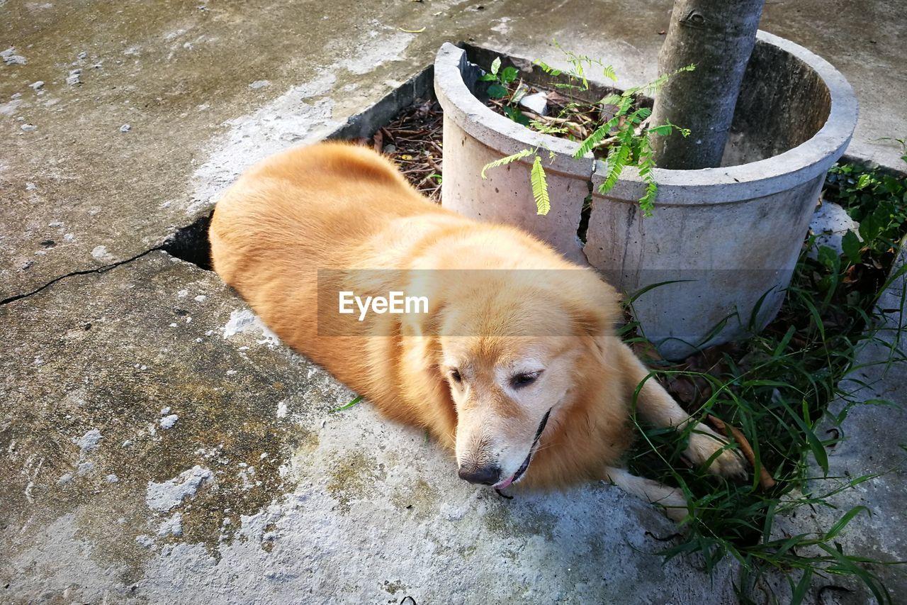 HIGH ANGLE VIEW OF DOG LYING DOWN ON SHORE