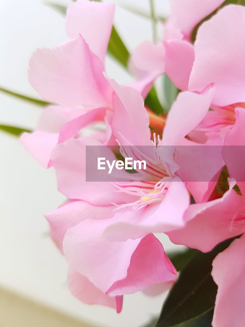 pink color, flower, petal, beauty in nature, fragility, nature, no people, freshness, close-up, growth, flower head, blossom, plant, springtime, day, blooming, outdoors