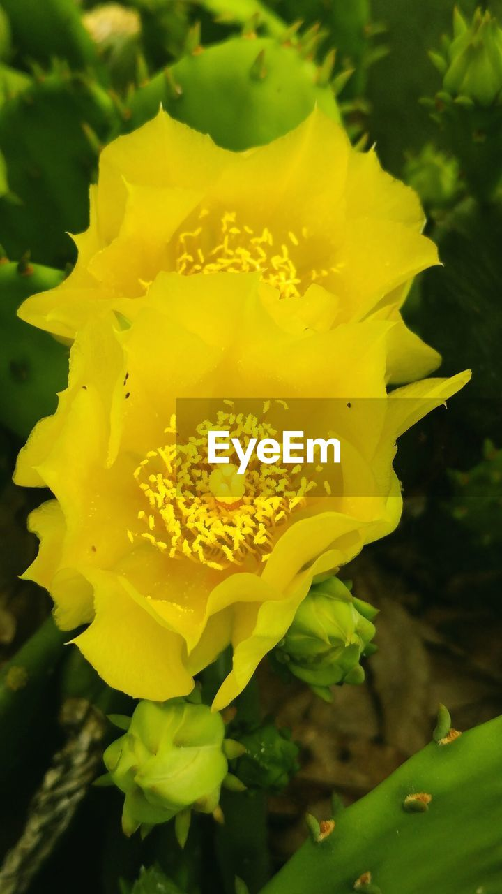 flower, yellow, petal, beauty in nature, fragility, nature, flower head, freshness, growth, outdoors, plant, close-up, no people, day, blooming