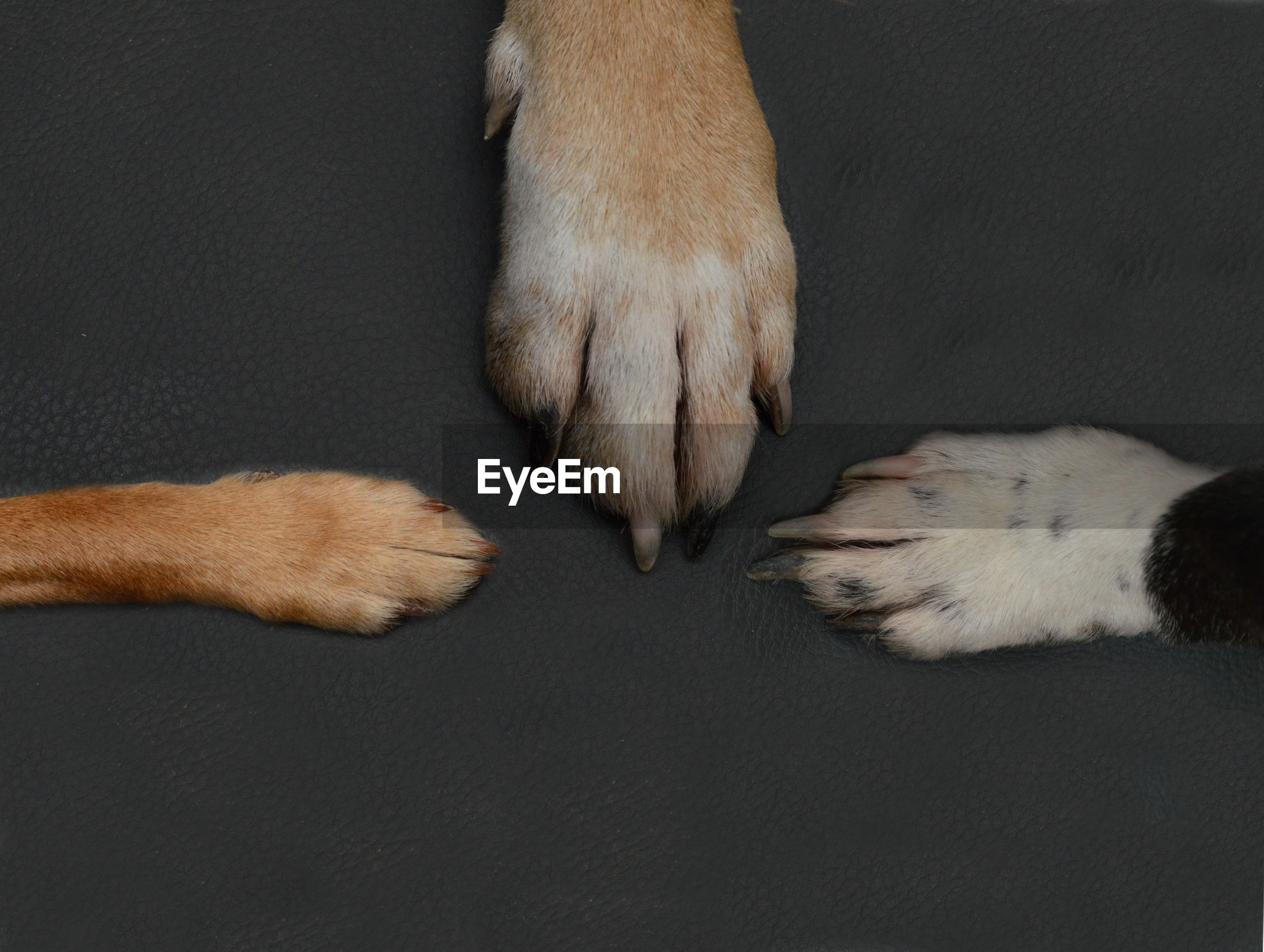 Low section of person with dog