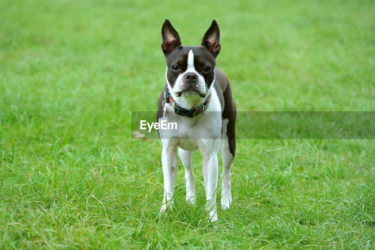 View of dog standing in garden