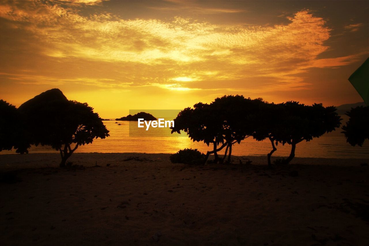 Scenic shot of silhouette trees on beach