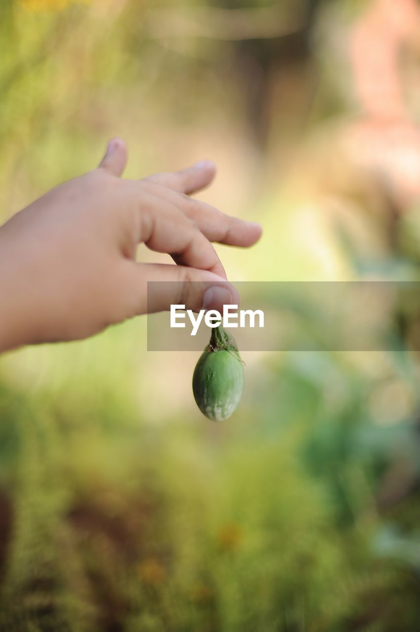 human hand, hand, human body part, one person, food and drink, food, fruit, real people, focus on foreground, holding, healthy eating, day, unrecognizable person, selective focus, close-up, green color, wellbeing, leaf, nature, finger, outdoors, human limb